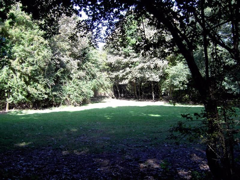 oaks-campsite-1